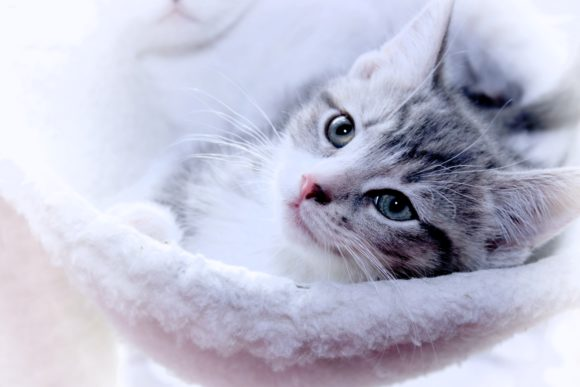 Print on Demand: Beautiful Kitten Graphic Photos By JLBIMAGES - Image 1