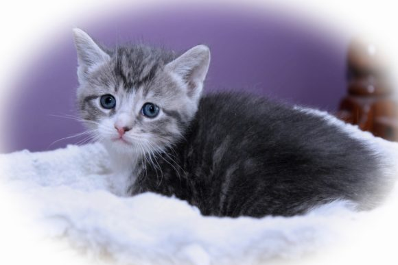 Print on Demand: Beautiful Kitten Graphic Photos By JLBIMAGES