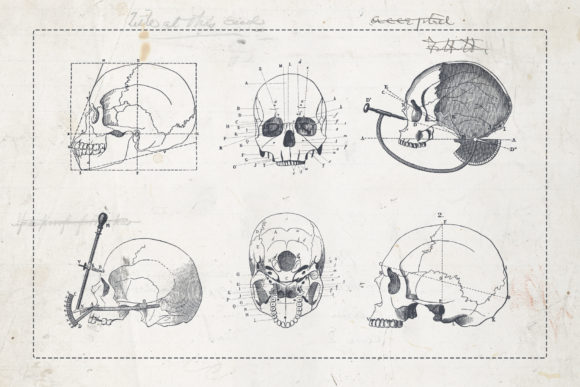 Craniometry Graphic Illustrations By BlackLabel - Image 3