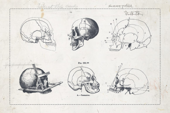 Craniometry Graphic Illustrations By BlackLabel - Image 5