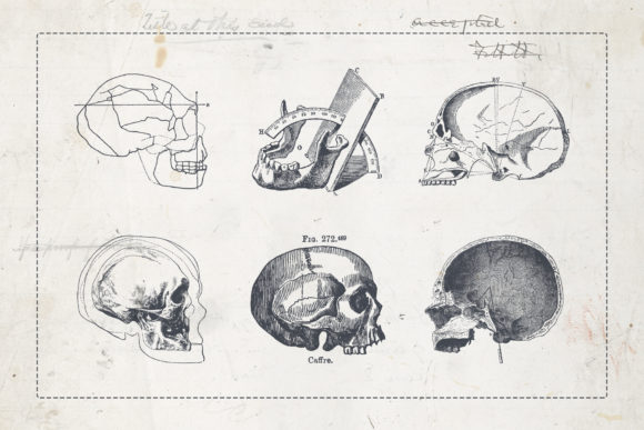 Craniometry Graphic Illustrations By BlackLabel - Image 7