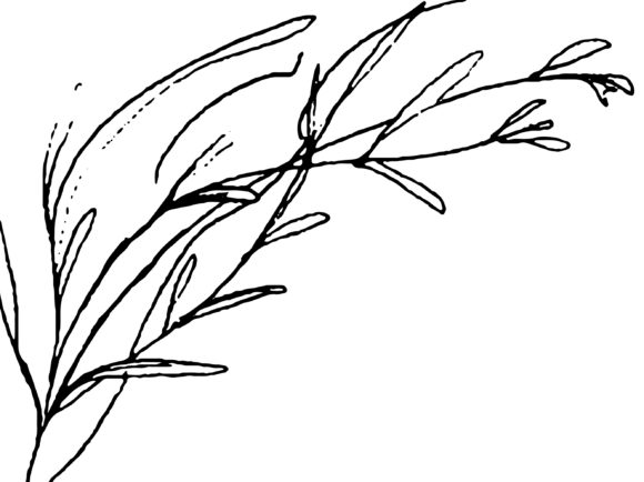 Print on Demand: Floral Pencil Drawing One Line Art Graphic Illustrations By Primafox Design - Image 5