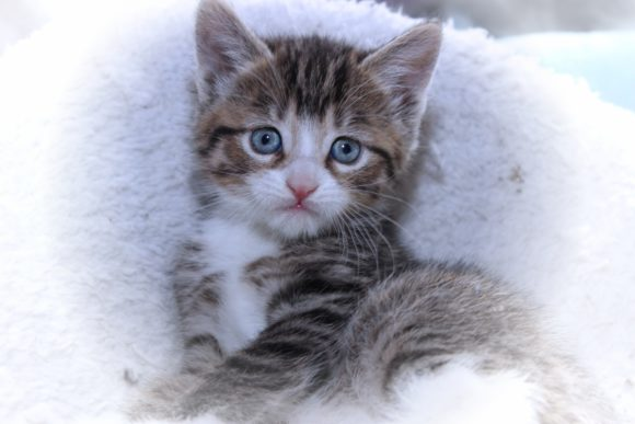 Print on Demand: Fluffy Brown Tabby Kitten Graphic Photos By JLBIMAGES - Image 1