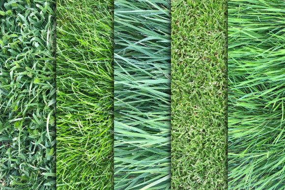 Grass Textures X10 Vol3 Graphic Textures By SmartDesigns