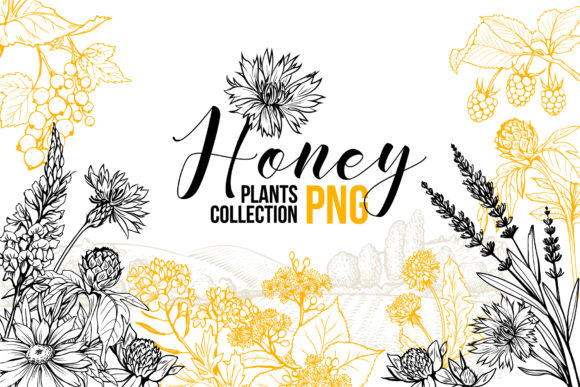 Honey Plants Engraving Collection Graphic Illustrations By ilonitta.r