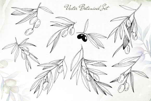 Print on Demand: Olive Branches Collection  Watercolor Graphic Illustrations By MyStocks - Image 3