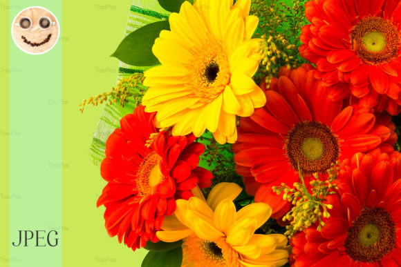 Red and Yellow Daisy on Green Background Graphic By TasiPas Image 1