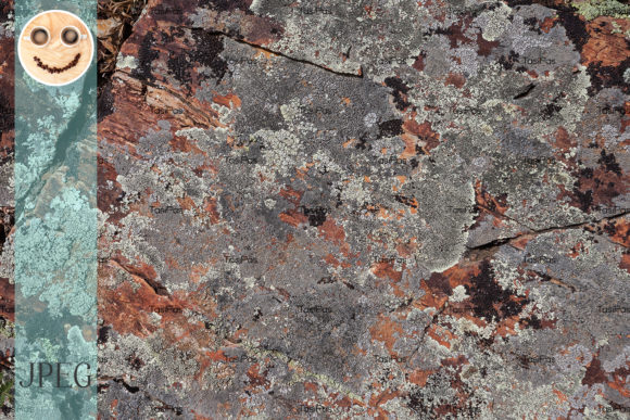 Print on Demand: Rock Stone Moss Texture Graphic Nature By TasiPas