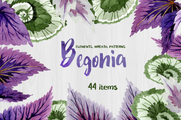 Print on Demand: Decorative Begonia Purple Watercolor Graphic Illustrations By MyStocks