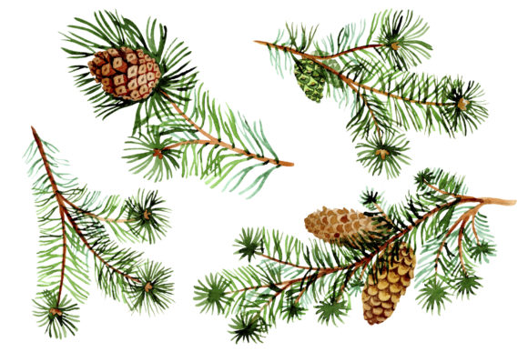 Print on Demand: Evergreen with Buds Watercolor Graphic Illustrations By MyStocks - Image 2