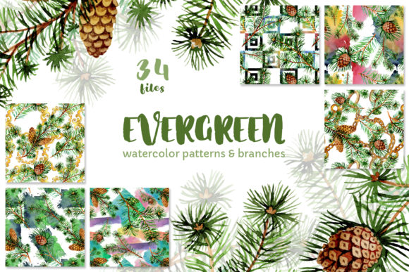 Print on Demand: Evergreen with Buds Watercolor Graphic Illustrations By MyStocks