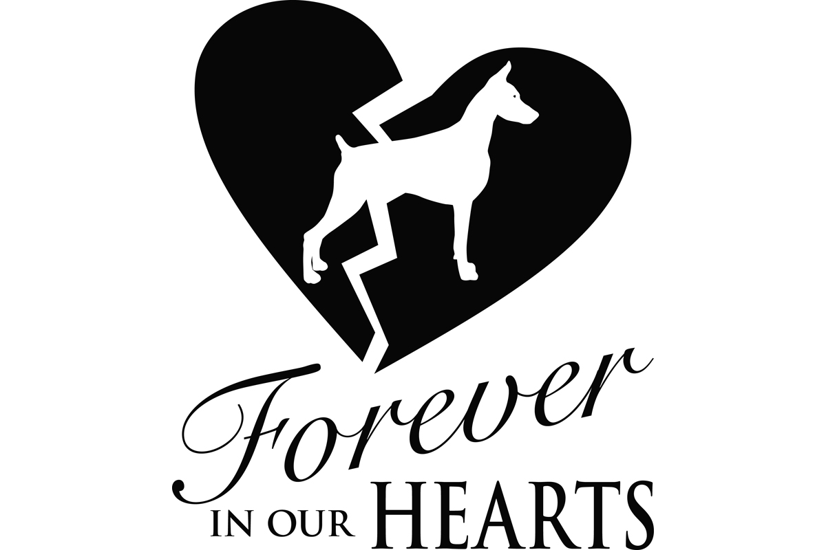 Download Free Pet Memorial For Doberman Pinscher Graphic By Idrawsilhouettes for Cricut Explore, Silhouette and other cutting machines.