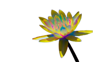 Colorful Enhanced Water Lilies Graphic By Rosalie Scanlon