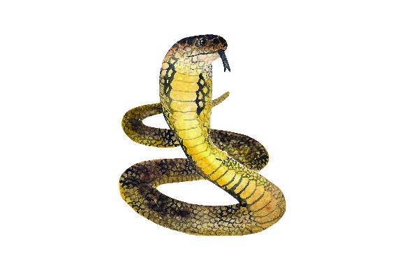 King Cobra - Watercolor Animals Craft Cut File By Creative Fabrica Crafts - Image 1