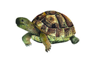 Tortoise - Watercolor Craft Design By Creative Fabrica Crafts