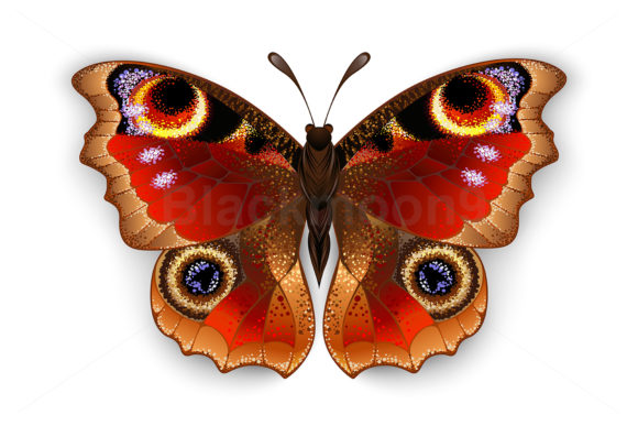 Butterfly Peacock Eye Graphic By Blackmoon9 183 Creative