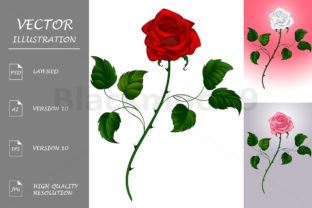 Roses Graphic Illustrations By Blackmoon9