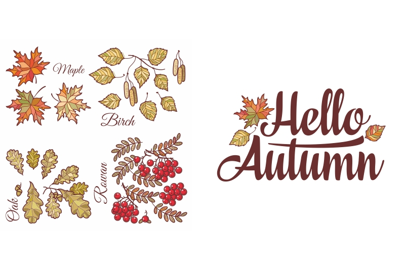 Download Free Hello Autumn Autumn Leaves Set Graphic By Zoyali Creative Fabrica for Cricut Explore, Silhouette and other cutting machines.