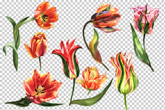 Print on Demand: Tulip Red Watercolor Flower Set Graphic Illustrations By MyStocks - Image 2