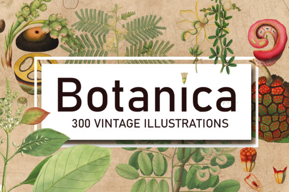 Print on Demand: 300 Antique Botanical Illustrations Gráfico Ilustraciones Por denestudios