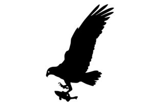 Download Free Osprey Bird Silhouette Graphic By Idrawsilhouettes Creative for Cricut Explore, Silhouette and other cutting machines.