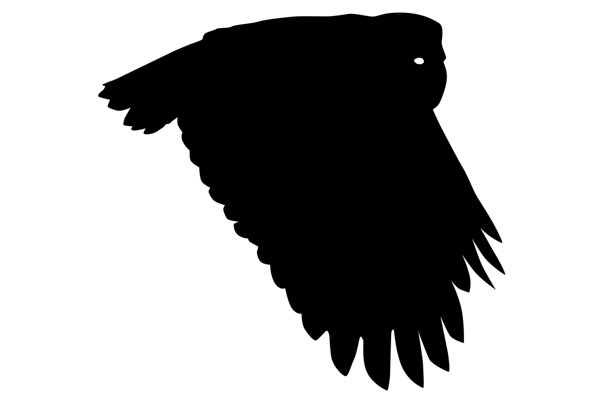 Download Free Owl Bird Silhouette Graphic By Idrawsilhouettes Creative Fabrica for Cricut Explore, Silhouette and other cutting machines.