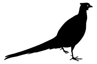 Download Free Pheasant Bird Silhouette Graphic By Idrawsilhouettes Creative for Cricut Explore, Silhouette and other cutting machines.