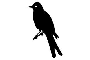 Download Free Scissortailed Flycatcher Bird Silhouette Graphic By for Cricut Explore, Silhouette and other cutting machines.