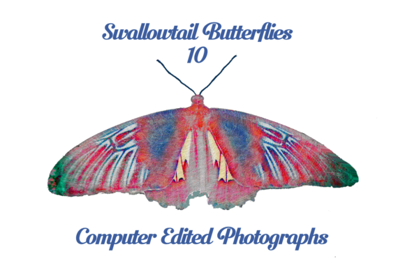 Swallowtail Butterflies Computer Edited Graphic Photos By Rosalie Scanlon