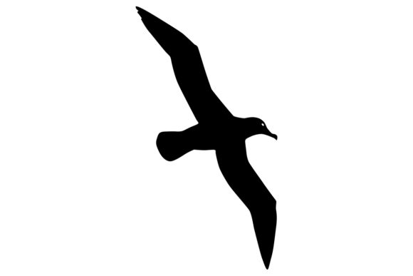 Download Free Albatross Bird Silhouette Grafico Por Idrawsilhouettes Creative Fabrica for Cricut Explore, Silhouette and other cutting machines.