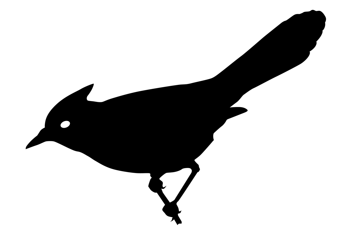 Download Free Bluejay Bird Silhouette Graphic By Idrawsilhouettes Creative for Cricut Explore, Silhouette and other cutting machines.
