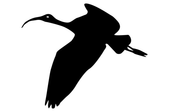 Download Free Ibis Bird Silhouette Graphic By Idrawsilhouettes Creative Fabrica for Cricut Explore, Silhouette and other cutting machines.