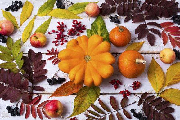Print on Demand: Fall Leaves Pumpkin Berries Graphic Nature By TasiPas - Image 2