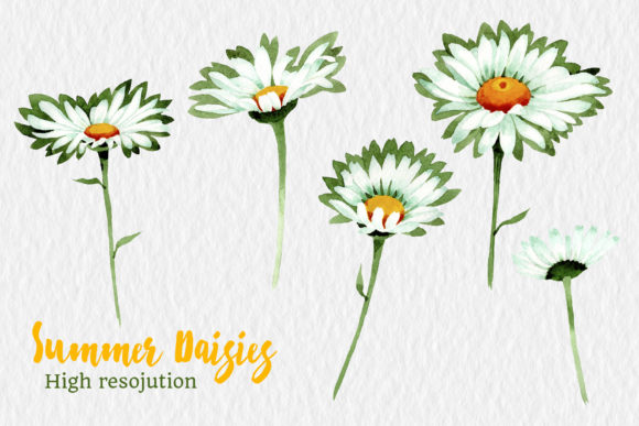 Print on Demand: Watercolor Daisy White Flower Graphic Illustrations By MyStocks - Image 2