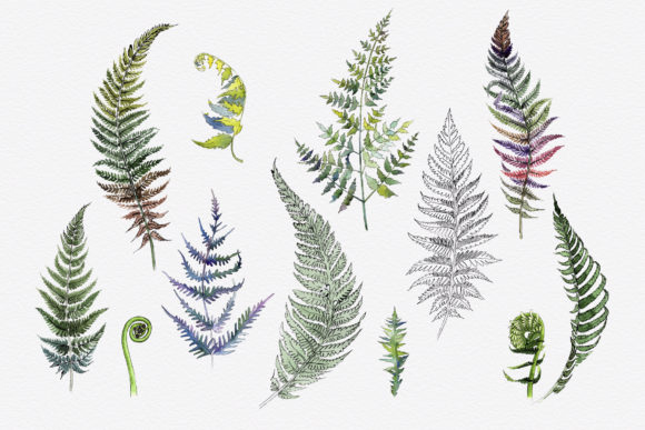 Print on Demand: Green Fern Leaves Watercolor Png Graphic Illustrations By MyStocks - Image 2