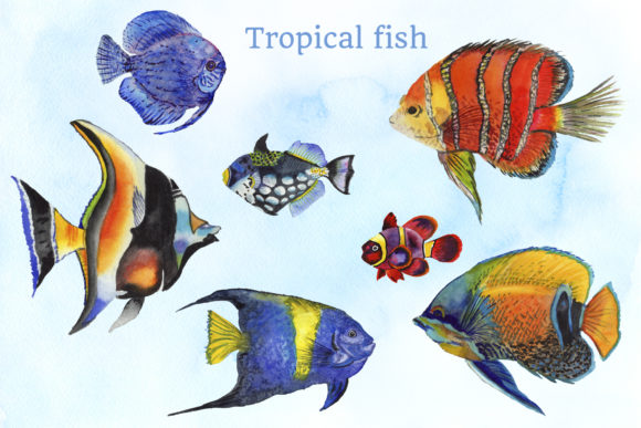 Print on Demand: Fish Illustration Watercolor Png Graphic Illustrations By MyStocks - Image 2