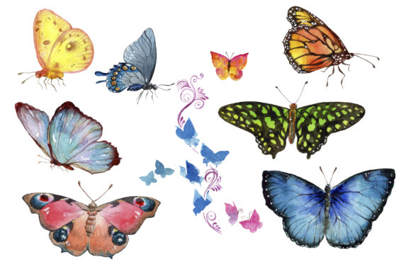 Print on Demand: Miracle of Nature Butterflies Watercolor Graphic Illustrations By MyStocks - Image 2