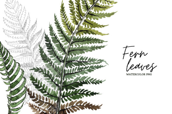 Print on Demand: Green Fern Leaves Watercolor Png Graphic Illustrations By MyStocks - Image 8