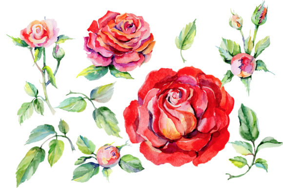 Print on Demand: Roses Red PNG Watercolor Graphic Illustrations By MyStocks - Image 2