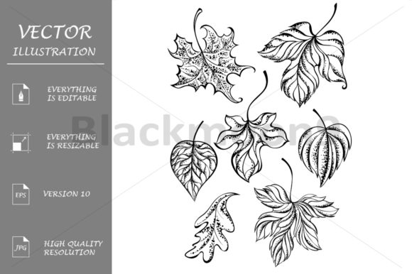 Set of Contour Leaves Graphic Illustrations By Blackmoon9