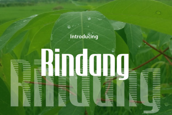 Print on Demand: Rindang Display Font By da_only_aan - Image 1