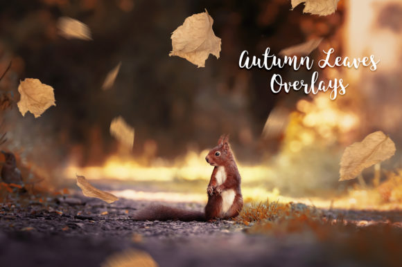 Autumn Leaves Overlays Graphic Nature By FaeryDesign