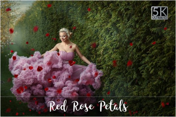Red Rose Petals Overlays Graphic Nature By FaeryDesign