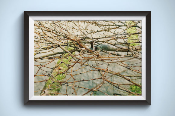 Dry Twigs Flowers Photography Graphic Nature By Kerupukart Production