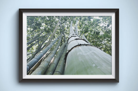 Large Bamboo is Tall and Curved Graphic Nature By Kerupukart Production