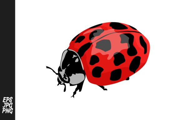 Ladybug Vector Clipart Graphic By Arief Sapta Adjie Creative
