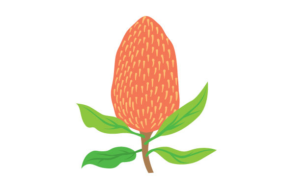Download Free Banksia Svg Cut File By Creative Fabrica Crafts Creative Fabrica for Cricut Explore, Silhouette and other cutting machines.