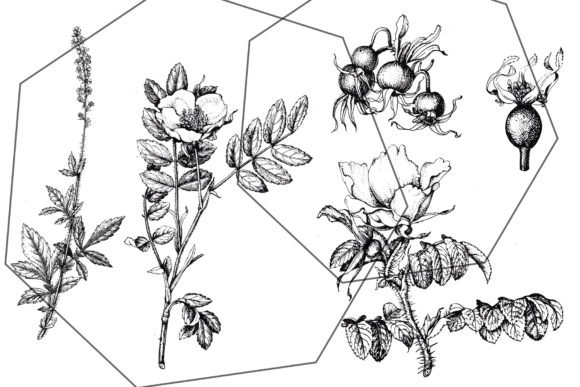 Print on Demand: Black Botanical Ink Floral Sketches Set Graphic Illustrations By kaleriiatv