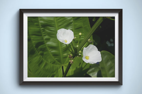 Flowers Photography of Botanical Garden Graphic Nature By Kerupukart Production - Image 1