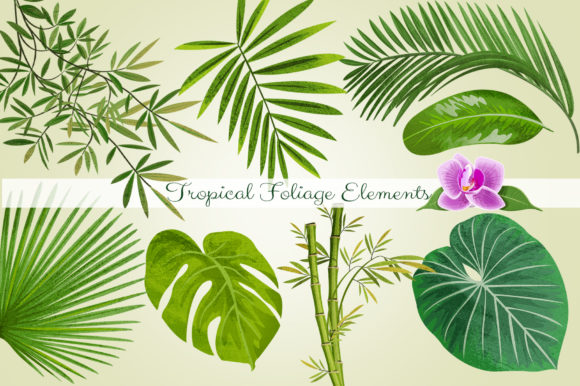 Tropical Foliage PNG Graphic Elements Graphic Illustrations By Dapper Dudell